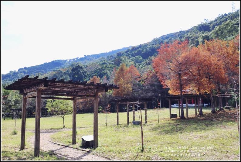 光復森林公園(落羽松)-2021-01-39.jpg