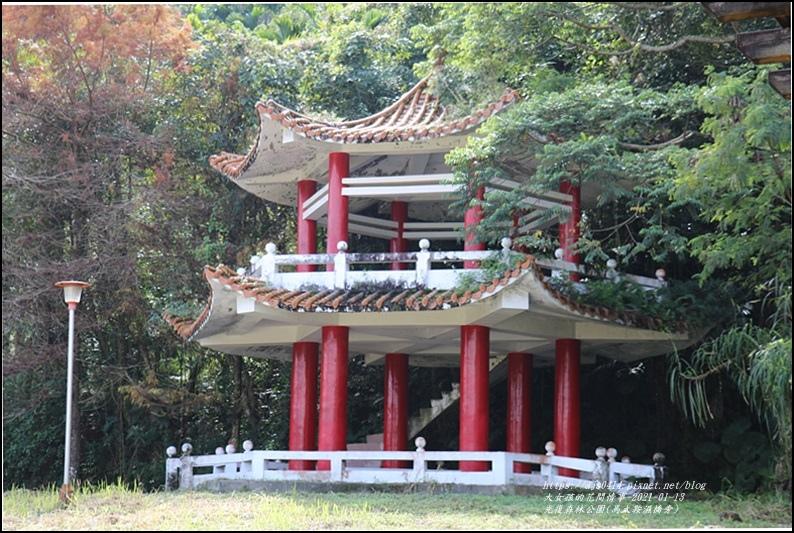 光復森林公園(落羽松)-2021-01-40.jpg
