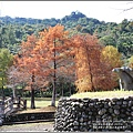 光復森林公園(落羽松)-2021-01-35.jpg