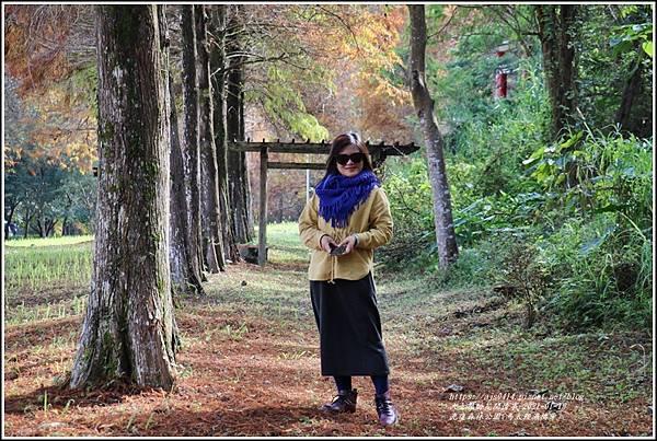 光復森林公園(落羽松)-2021-01-32.jpg