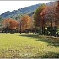 光復森林公園(落羽松)-2021-01-27.jpg