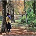 光復森林公園(落羽松)-2021-01-31.jpg
