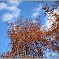 光復森林公園(落羽松)-2021-01-20.jpg