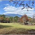 光復森林公園(落羽松)-2021-01-18.jpg