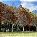 光復森林公園(落羽松)-2021-01-19.jpg
