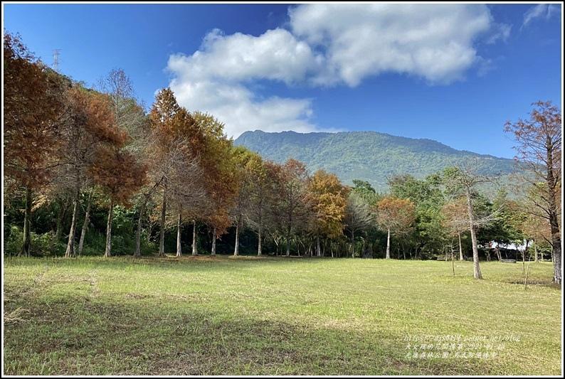 光復森林公園(落羽松)-2021-01-17.jpg