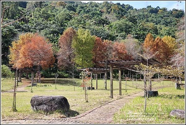 光復森林公園(落羽松)-2021-01-21.jpg