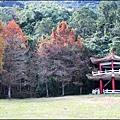 光復森林公園(落羽松)-2021-01-14.jpg