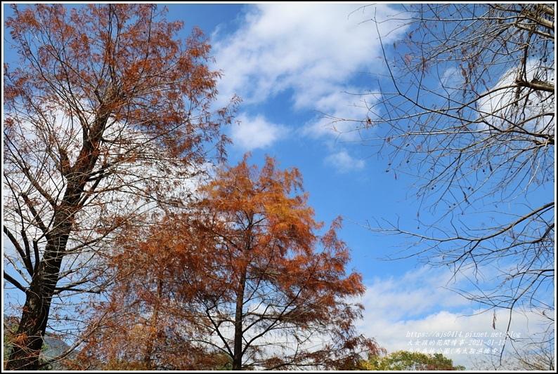 光復森林公園(落羽松)-2021-01-15.jpg