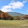 光復森林公園(落羽松)-2021-01-13.jpg