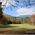 光復森林公園(落羽松)-2021-01-11.jpg