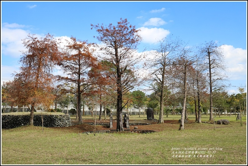 光復森林公園(落羽松)-2021-01-08.jpg