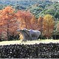 光復森林公園(落羽松)-2021-01-10.jpg