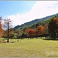 光復森林公園(落羽松)-2021-01-02.jpg
