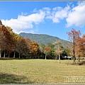 光復森林公園(落羽松)-2021-01-01.jpg
