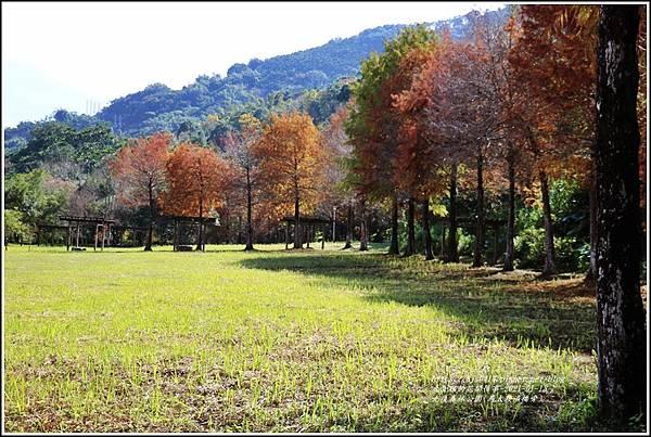 光復森林公園(落羽松)-2021-01-03.jpg
