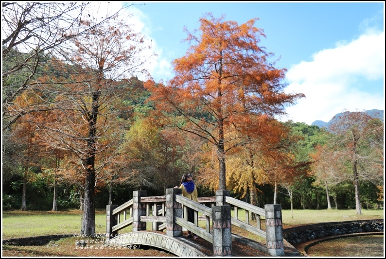 光復森林公園(落羽松)-2021-01-05.jpg