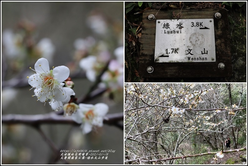 太魯閣水文山步道-2021-01-95.jpg