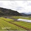 南安油菜花田-2021-01-04.jpg