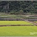 南安油菜花田-2021-01-09.jpg