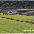 南安油菜花田-2021-01-10.jpg
