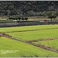 南安油菜花田-2021-01-11.jpg