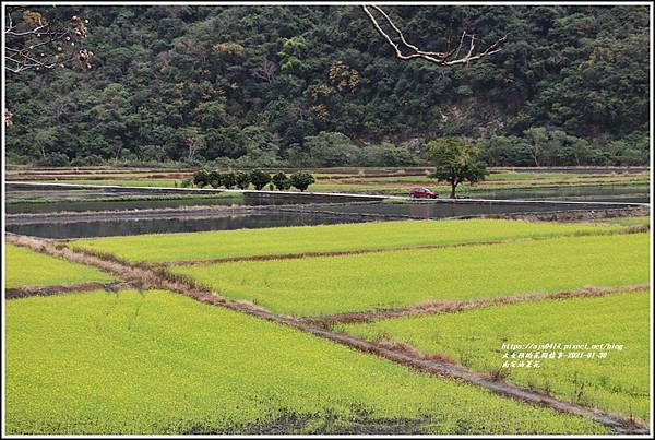 南安油菜花田-2021-01-12.jpg