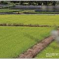 南安油菜花田-2021-01-15.jpg