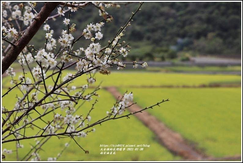 南安油菜花田-2021-01-16.jpg