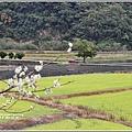 南安油菜花田-2021-01-18.jpg