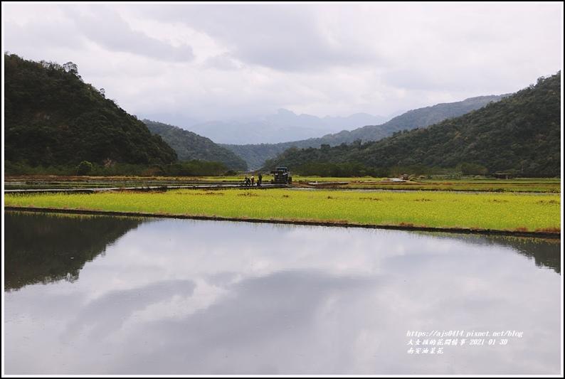 南安油菜花田-2021-01-22.jpg