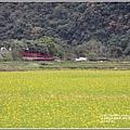南安油菜花田-2021-01-23.jpg