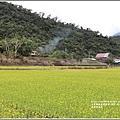 南安油菜花田-2021-01-24.jpg