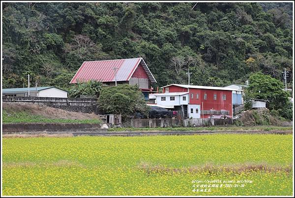 南安油菜花田-2021-01-25.jpg