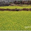 南安油菜花田-2021-01-28.jpg