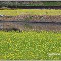 南安油菜花田-2021-01-27.jpg