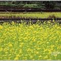 南安油菜花田-2021-01-29.jpg