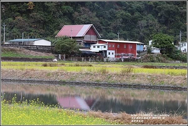 南安油菜花田-2021-01-31.jpg