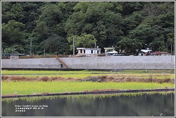 南安油菜花田-2021-01-33.jpg