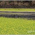 南安油菜花田-2021-01-30.jpg