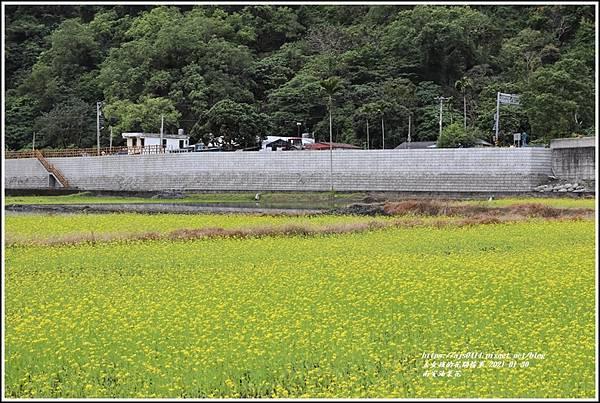 南安油菜花田-2021-01-34.jpg