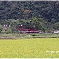 南安油菜花田-2021-01-36.jpg