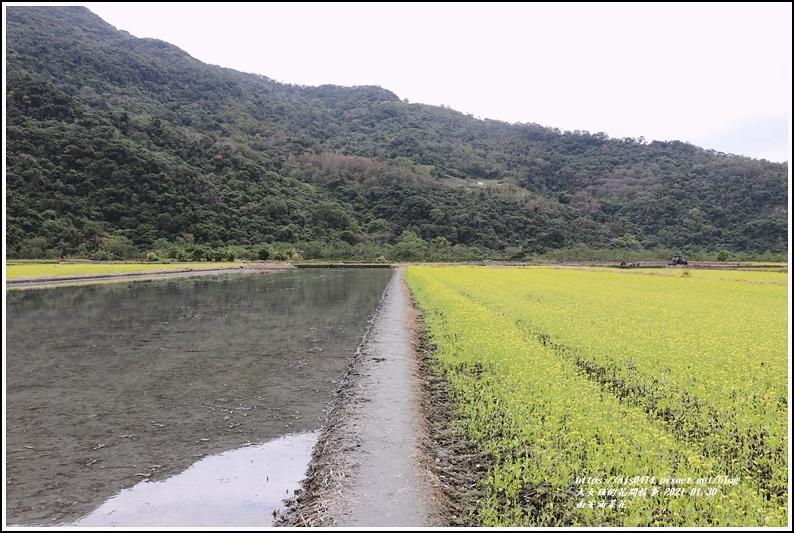 南安油菜花田-2021-01-38.jpg