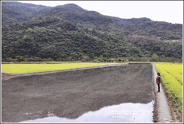 南安油菜花田-2021-01-44.jpg