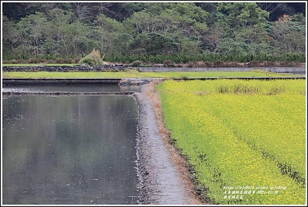 南安油菜花田-2021-01-46.jpg