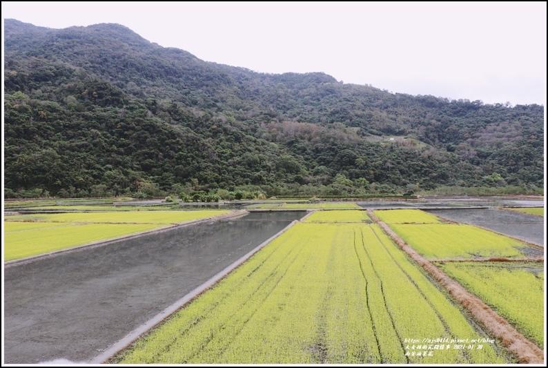 南安油菜花田-2021-01-49.jpg