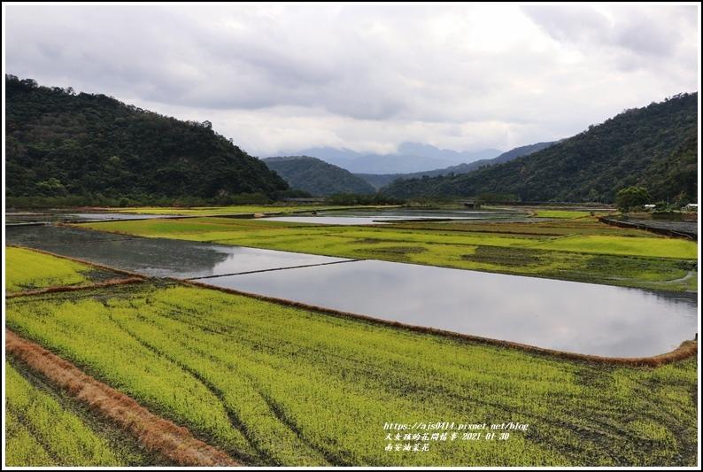 南安油菜花田-2021-01-50.jpg