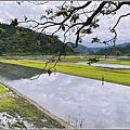 南安油菜花田-2021-01-59.jpg
