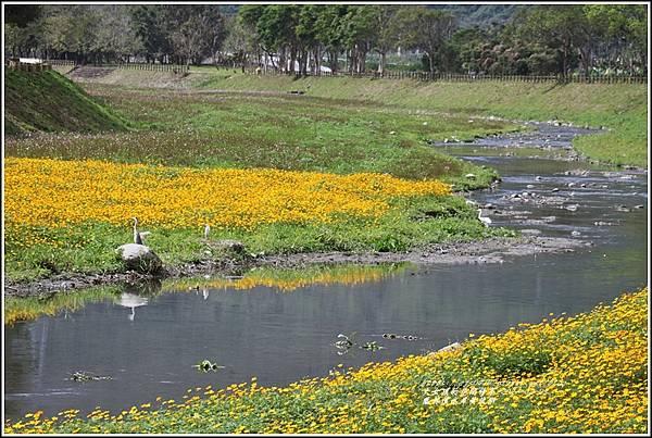 鳳林溪水岸黃波斯-2021-02-01.jpg