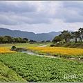 鳳林溪水岸黃波斯-2021-02-06.jpg